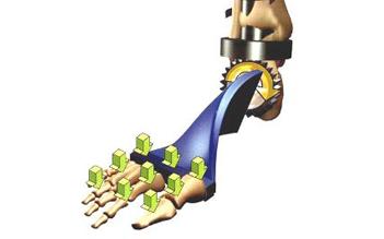 Biomeccanica della caviglia: dall'evoluzione del piede al gesto di camminare