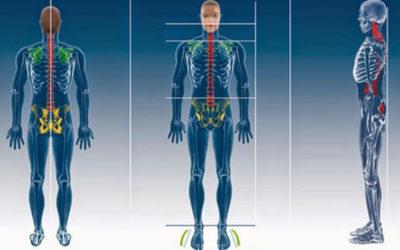 Sistema Tonico Posturale
