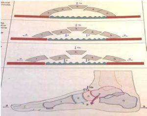 Principi di fisioterapia nell'apparato locomotore