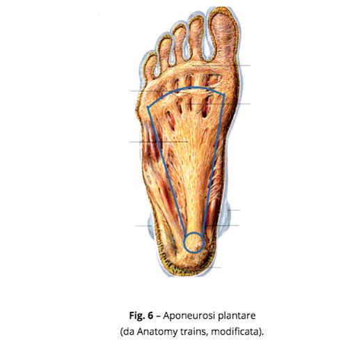 patologia funzionale del piede
