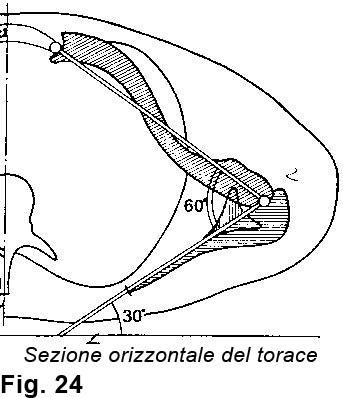 anatomia della spalla