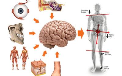 Lombalgia: Sintomo dello squilibrio del Sistema Tonico posturale