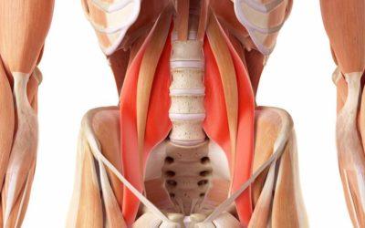 Il Muscolo Psoas
