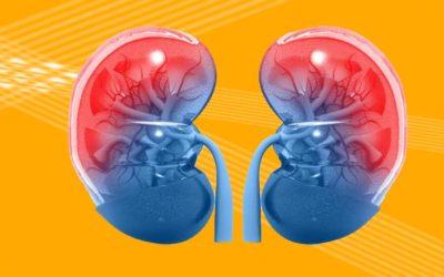 Importanza Del Trattamento Del Rene In Osteopatia