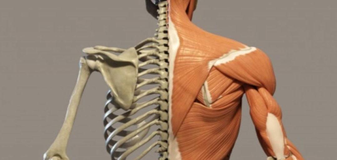 Myofascial Release e Trattamento Osteopatico
