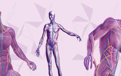 Concetto di fascia nel trattamento osteopatico