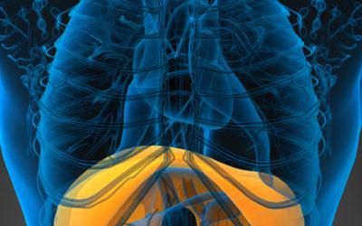 Il diaframma. Il muscolo con l'intelligenza emotiva