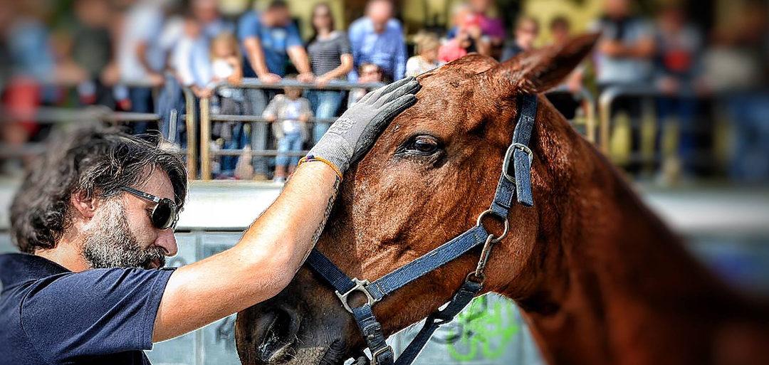 un mal di testa da cavallo