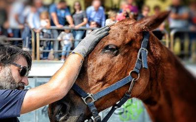Un mal di testa da cavallo. D.O. Giuseppe Totaro